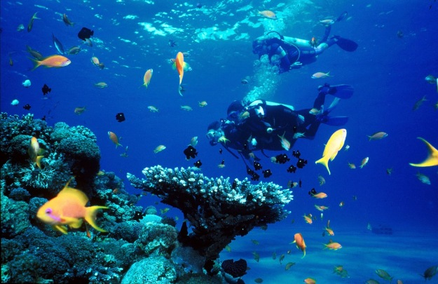 Diving-Bali-for-all-members-of-the-family