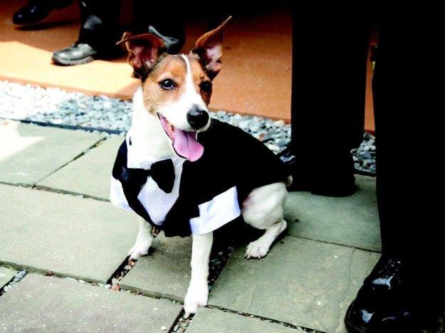 wedding-dogs-katie-preston-toepfer-oscar