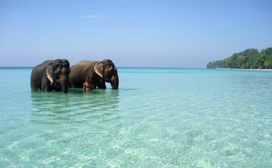 HAVELOCK-ISLAND-4