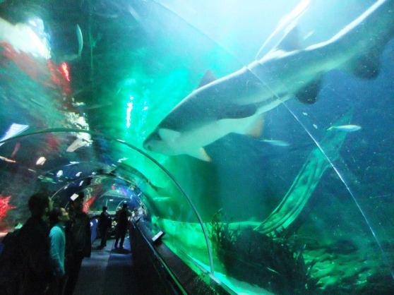 Kelly Tarlton Sea Life Aquarium
